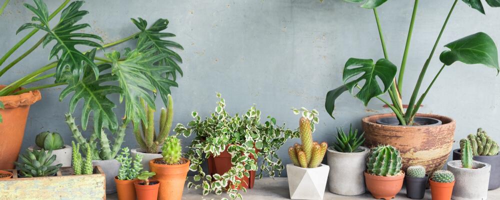 Groene kamerplanten te koop bij Almeerplant