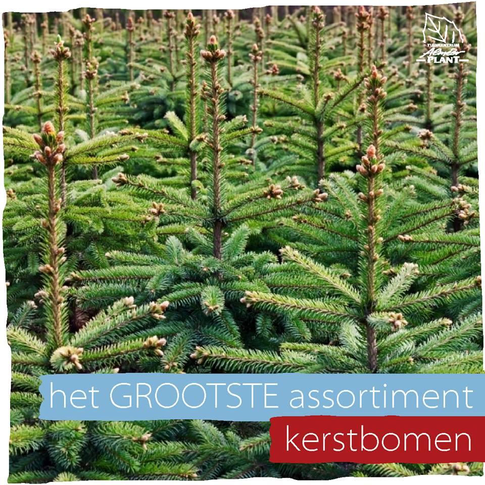 Kerstbomen kopen nabij %placename%!