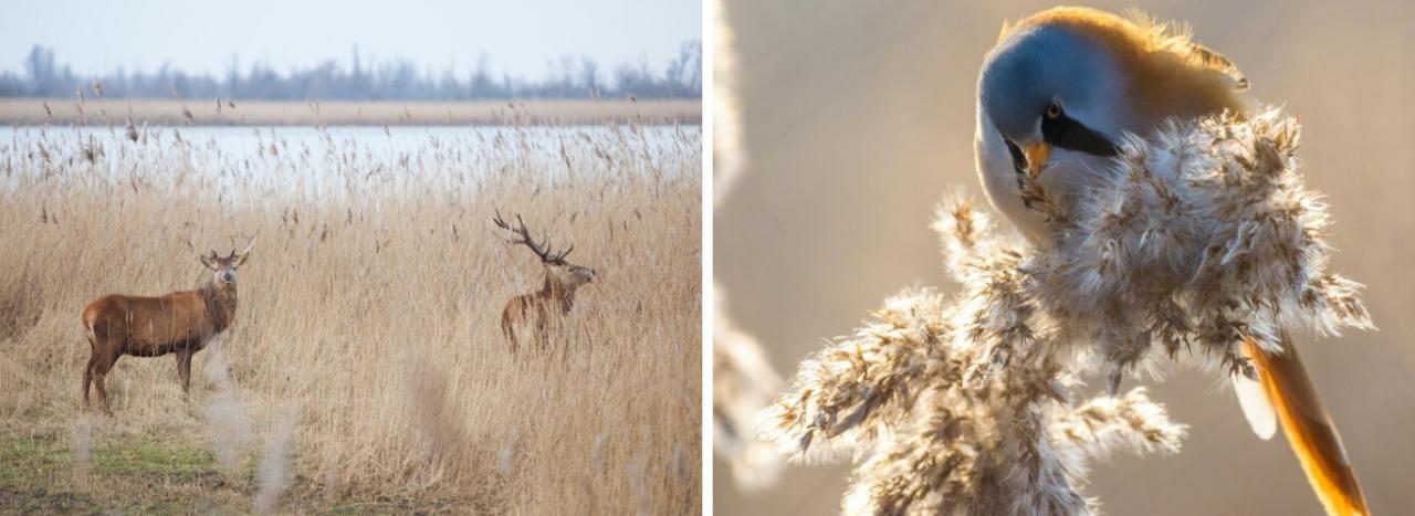 Oostvaardersplassen combineren met een bezoek aan Almeerplant