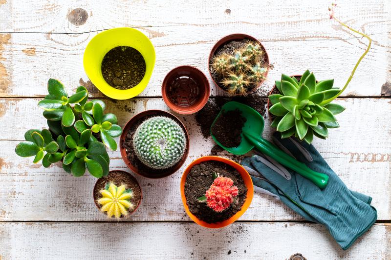 potgrond-planten-almere