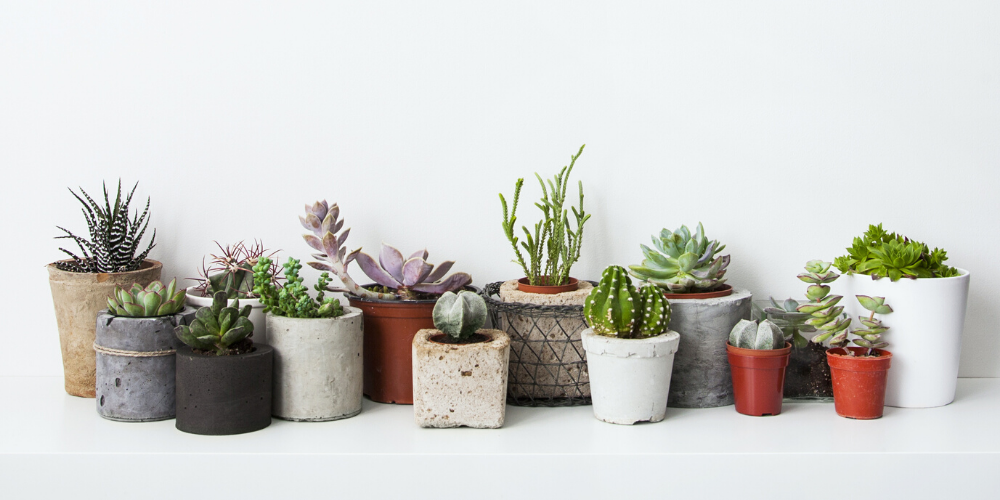 Vetplanten en cactussen bij tuincentrum Almeerplant