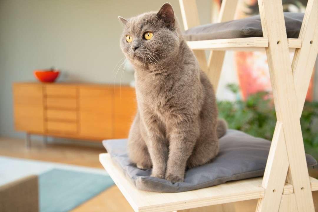 Katten artikelen