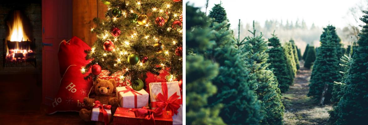 kerstbomen-kopen-tuincentrum-almeerplant-almere