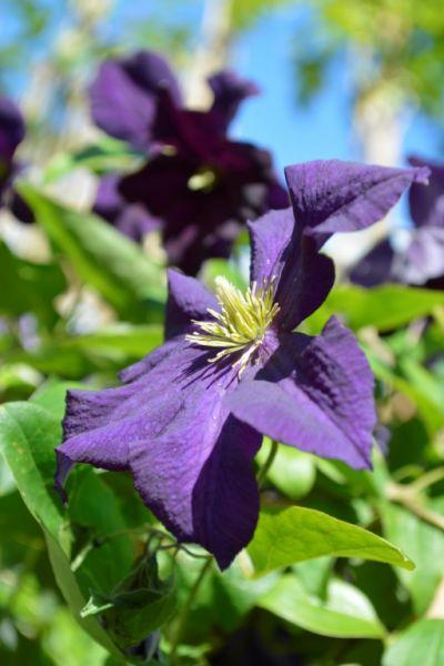 Tuinplanten   Fotoalbums   Almeer Plant