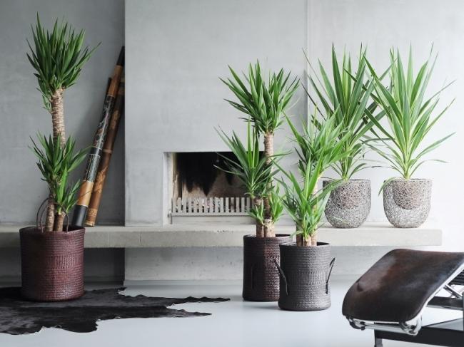 Kamerplanten assortiment almeer plant for Grote kamerplanten