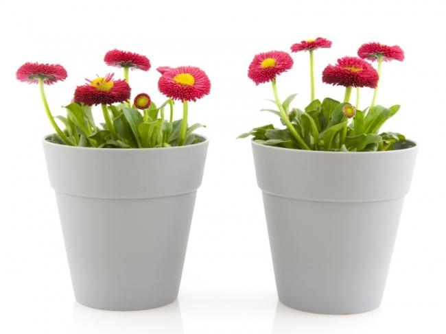 Kunststof Tuin Pot : Potterie assortiment almeer plant