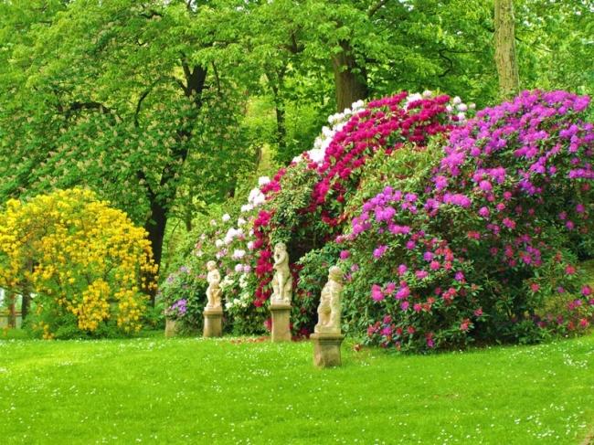 Bomen In Tuin : Bomen heesters en coniferen assortiment almeer plant
