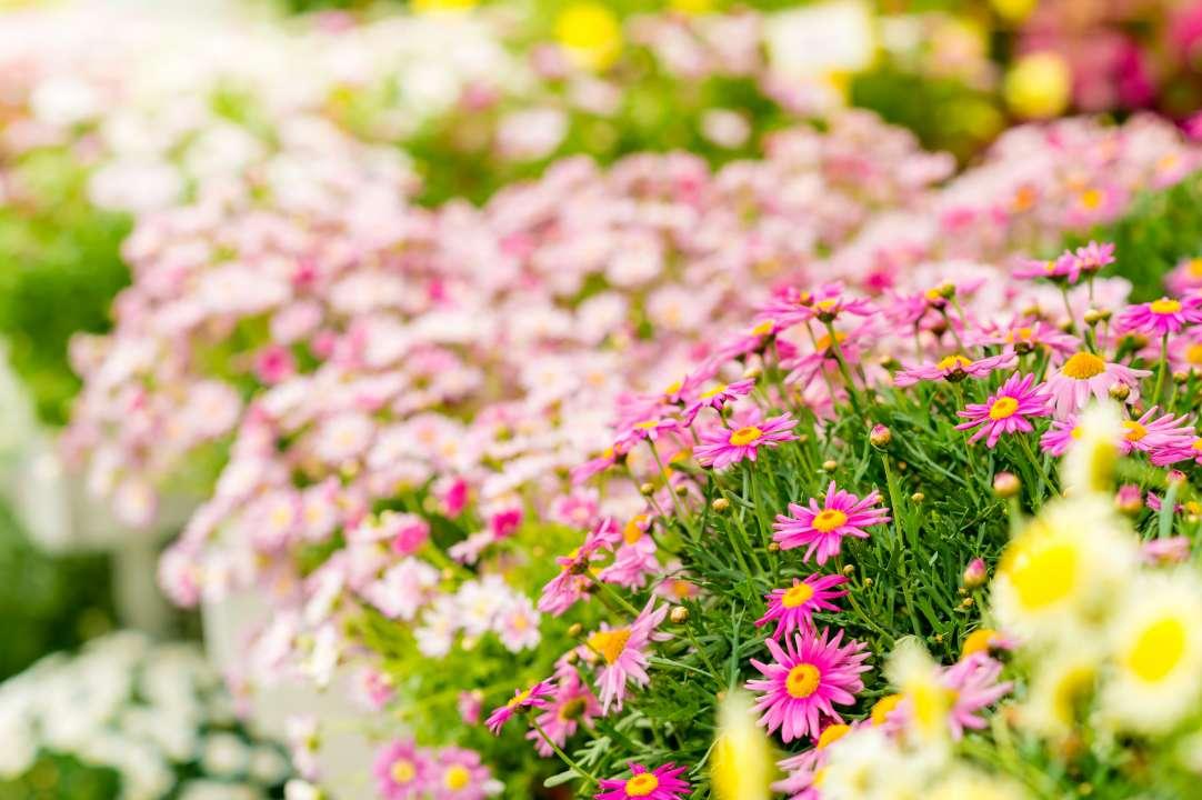 Het leukste tuincentrum in de buurt van Gooi